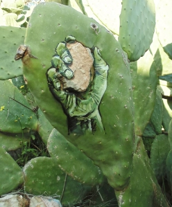 cactus2-ahmad yaseen